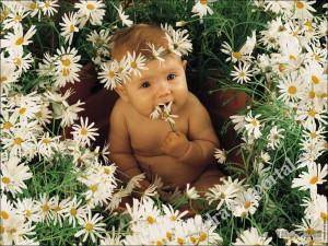 flower-baby-wallpapers